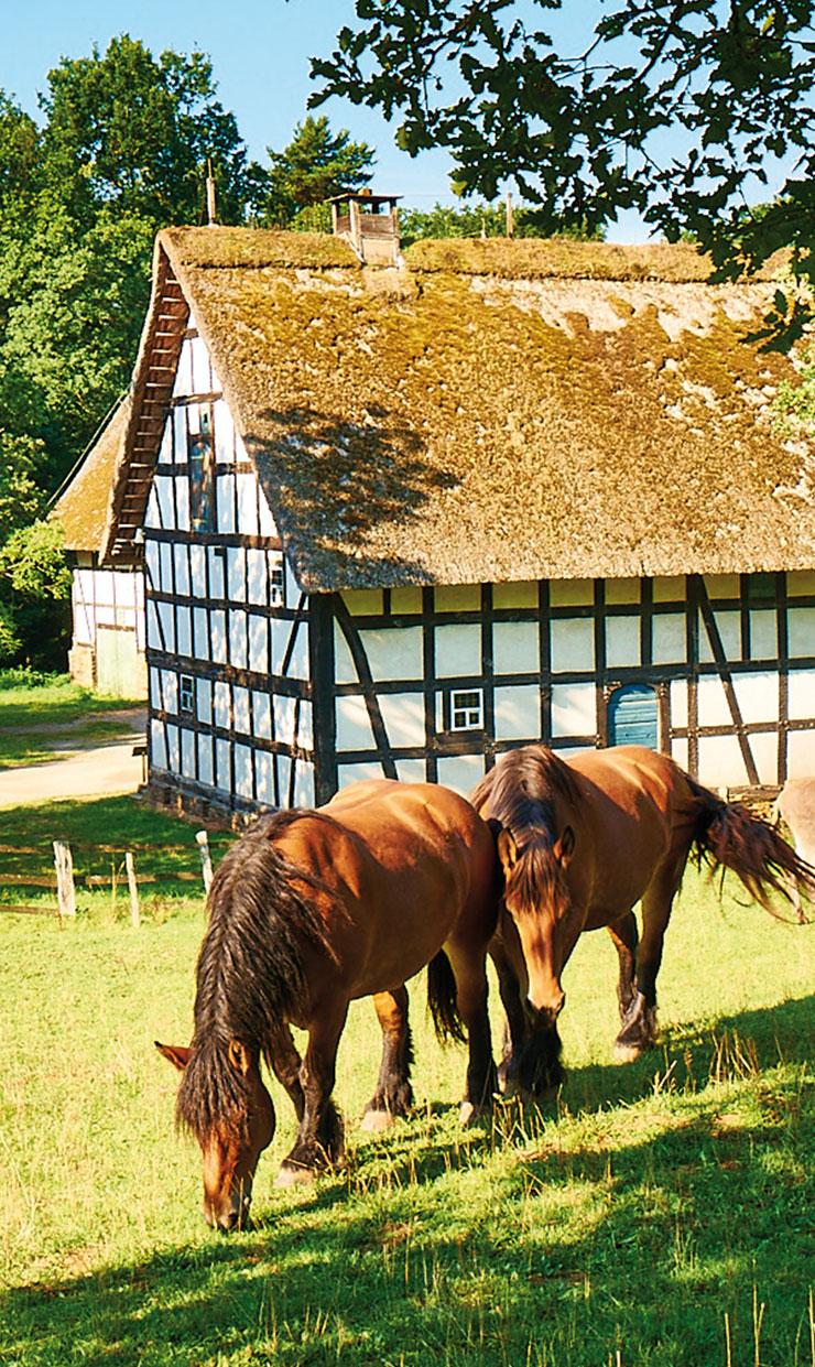 Beitragsbild Pferde